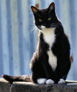 Friendly Cat 512